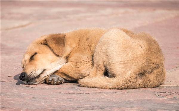 听说你喜欢午睡?中国科学家:白天睡觉中风几率高85%
