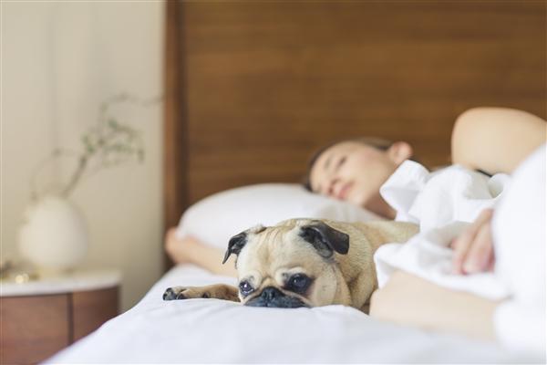 研究表明:阻塞性睡眠呼吸暂停症可以用口腔矫治器有效地治疗